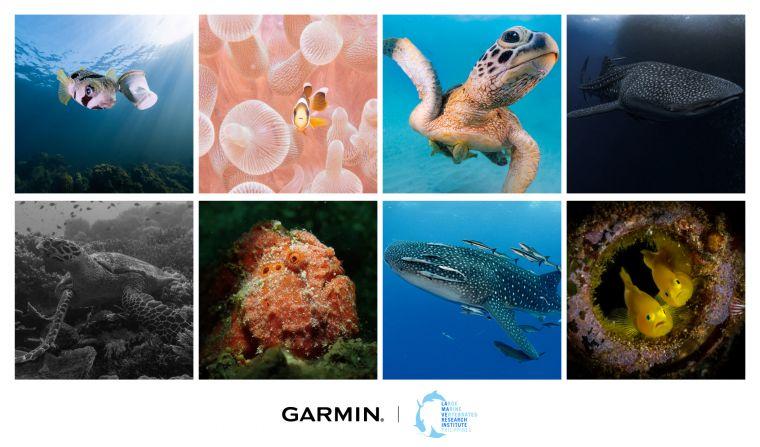 「The Descent Mission」亞洲海洋公益活動,成功蒐集超過1,800張野生海洋生物照片、辨識出超過600種生物物種。官方提供