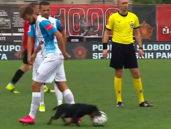 波士尼亞聯賽出現小黑狗搶球的十趣畫面。摘自官方推特